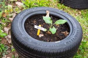 Goodyear Malaysia_Sekolah Kebangsaan Seksyen 20_Shah Alam_Recycled Tyres
