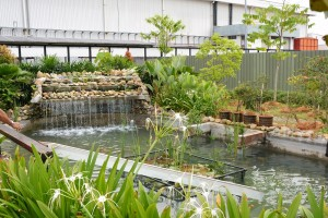 Perodua ECO Garden_Water Feature_Treated Wastewater_Malaysia